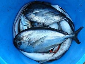 como-disfrutar-de-un-dia-de-pesca-fantastico