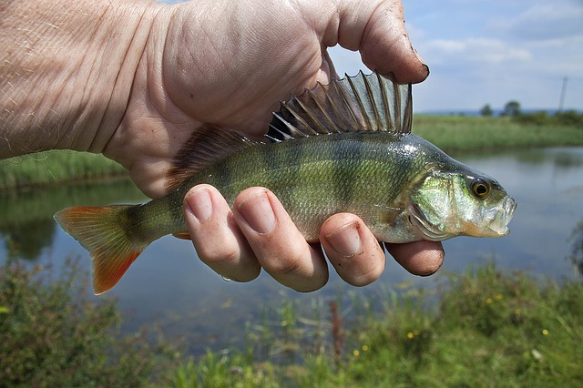 como-disfrutar-de-un-dia-feliz-de-pesca